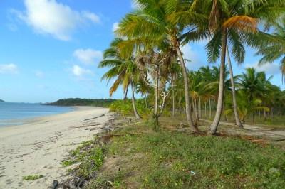 Badu Island Lilly Beach   Flickr - Photo Sharing!
