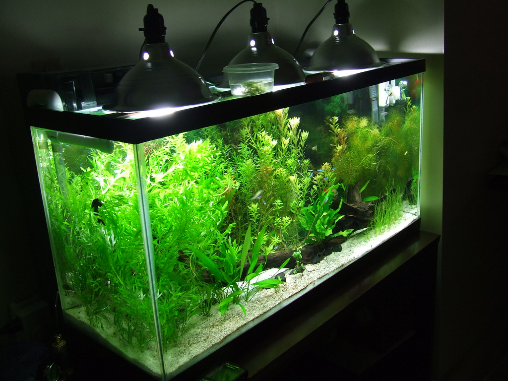 Best Cheap Led Aquarium Lighting