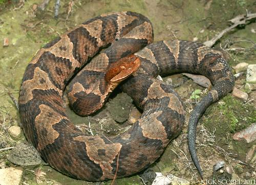 The Herping Michigan Blog: Reptiles & Amphibians of the NJ ...