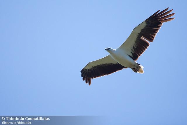Markham Park Film Soaring Eagle