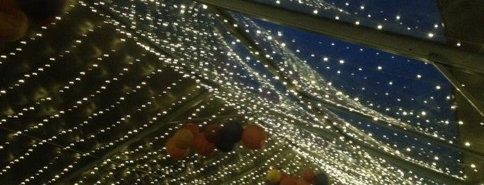 Zoo Lights Denver Co