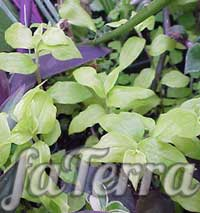 Plant Tradestation - Faterra