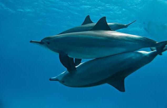 چگونه دلفین ها تولید مثل می کنند