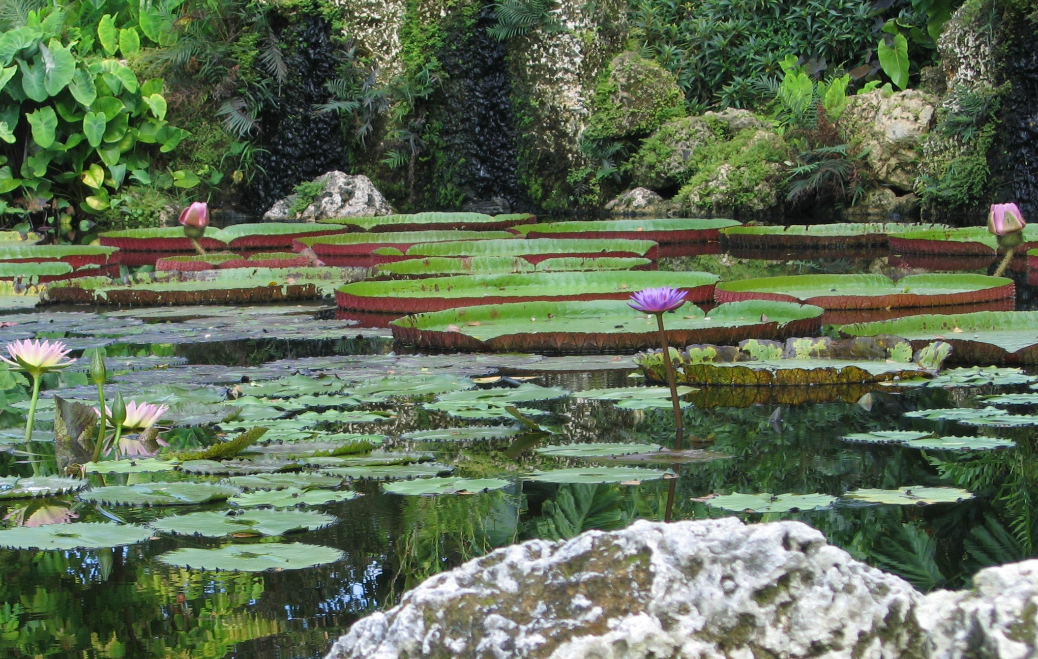 Lily Ponds Water Gardens