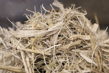 Sugarcane Offers Significant Opportunities In Sustainability