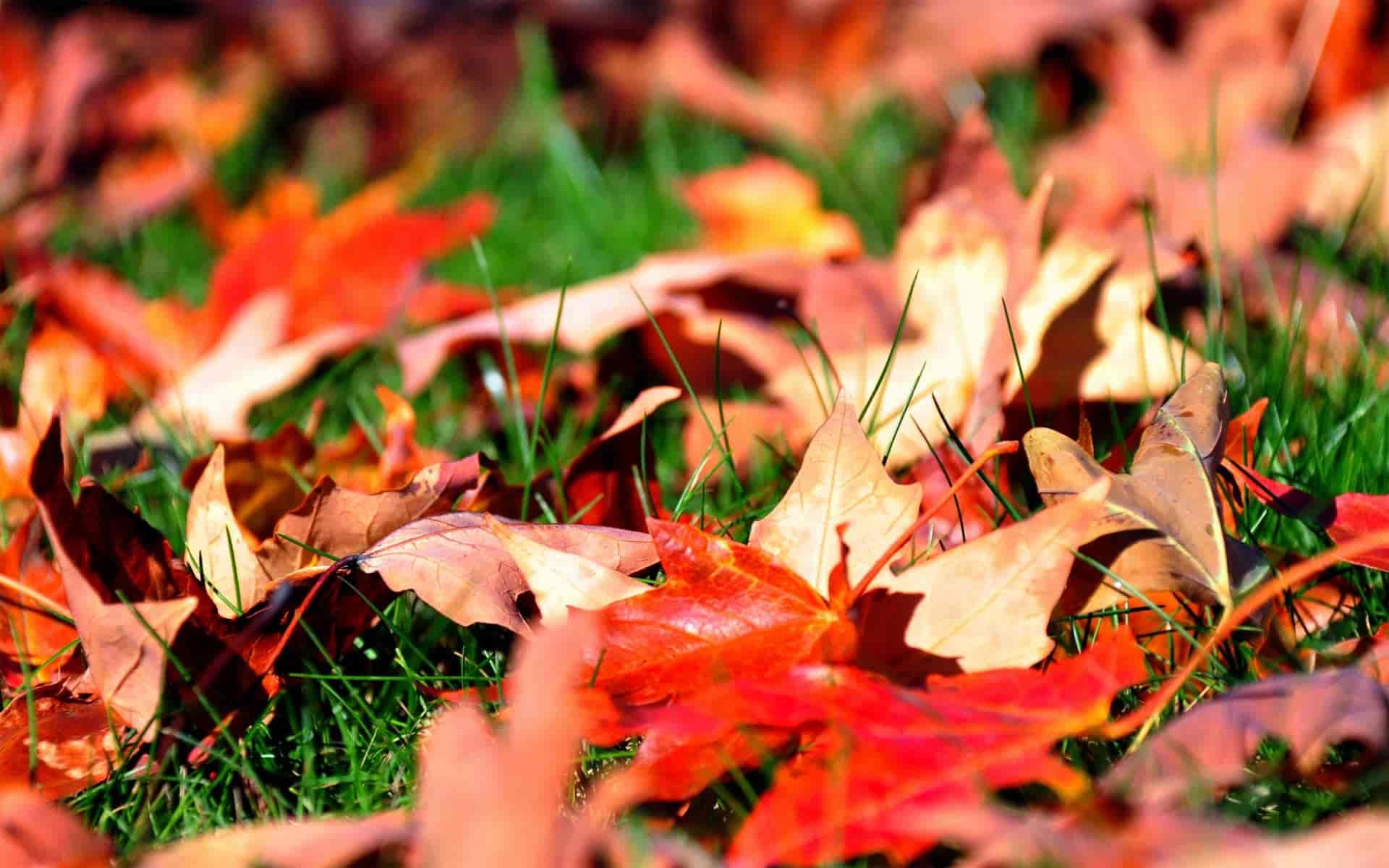 How Get Rid Fallen Leaves