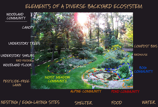 the backyard ecosystem natural landscaping gardening and landscape design in the catskills