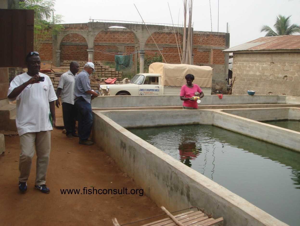 Fish Pond Layout And Design
