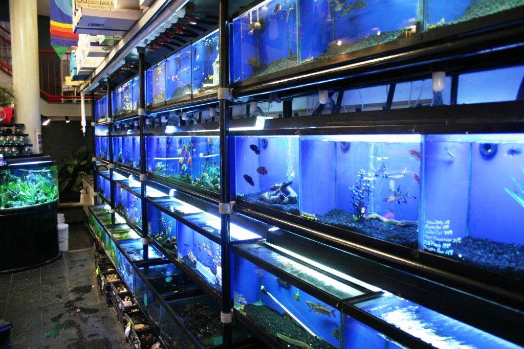 Aquarium Shop Near Me