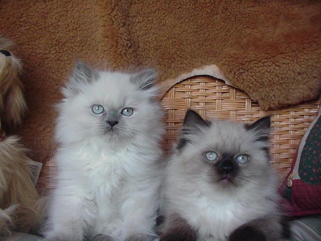 Near Cats Free Kittens Me