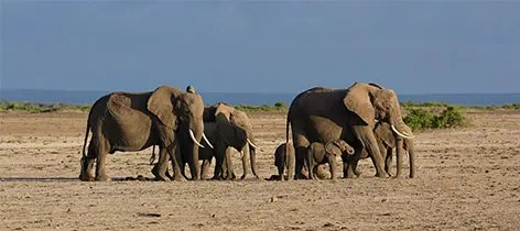 4 Days Tsavo East West and Amboseli Kenya Safari