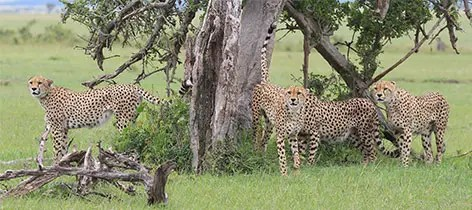 3 Days Sweetwaters Ol Pejeta Kenya Luxury Safari