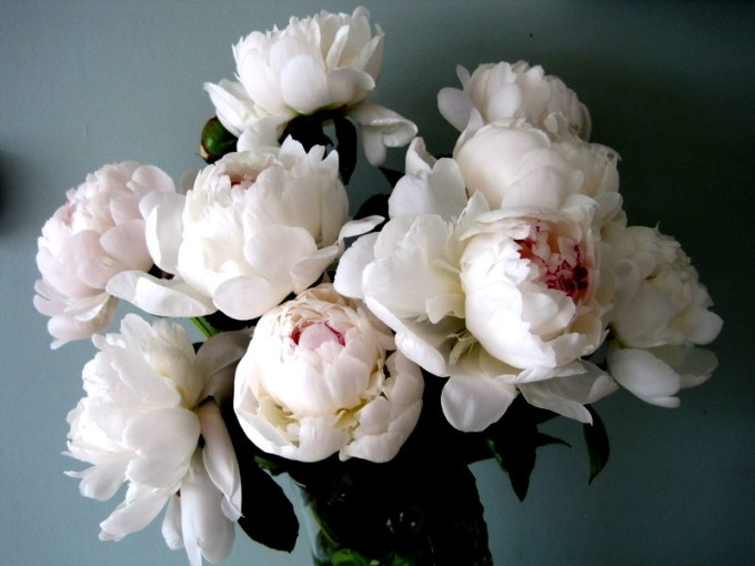 Peonies     the queen of flowers   Flirty Fleurs The Florist Blog     The
