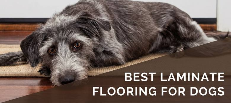 Best Floor Surface Dogs