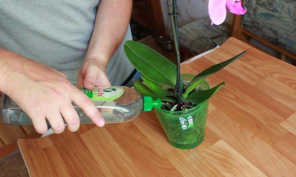 Орхидея суды қалай суға салу керек