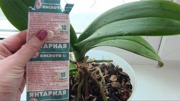 چگونه به orchid orchid - اگر ریشه ها یا بدون ریشه