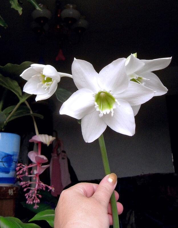 Floweros EUKHARISA.