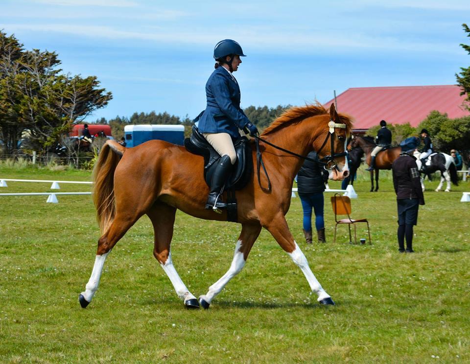 groundwork horses - 960×743