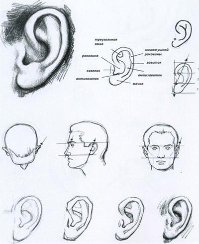 füleket húzni