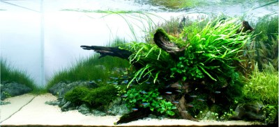 Aquarium Colorology: Entering Grey Territory with Neutral ...