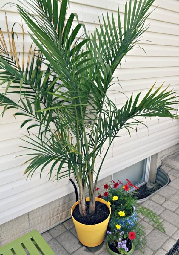 Best Indoor Potted Plants