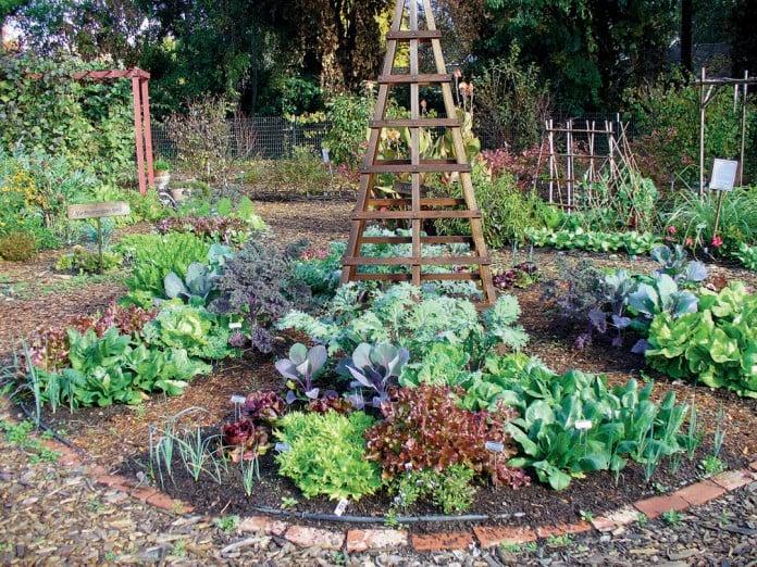 Design Your Own Vegetable Garden Plan