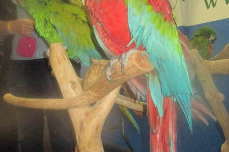 Characteristics Britannica Com Parrot Building Your Own Cage Or Flight Beauty Of Birds Face Canvas Prints Page