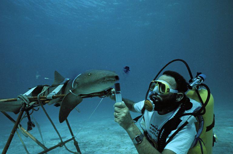 Marine Boilogist Work
