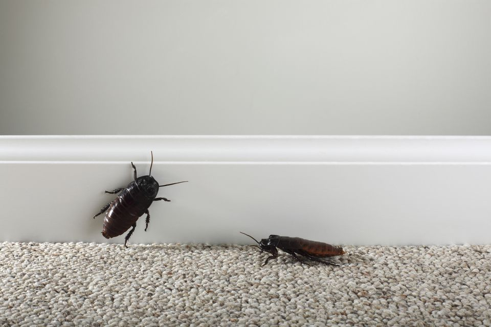 Remove Roaches Home