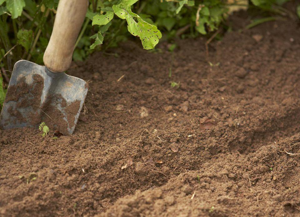 Making Vegetable Garden