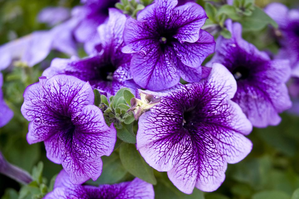 purple fowers   Kleo beachfix co purple fowers