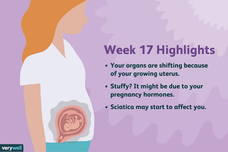 Pregnant How 17 Big Weeks Uterus