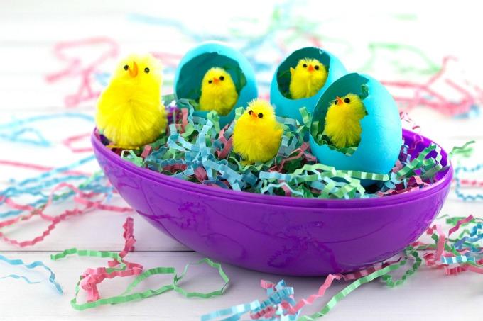 Easter chicks in egg