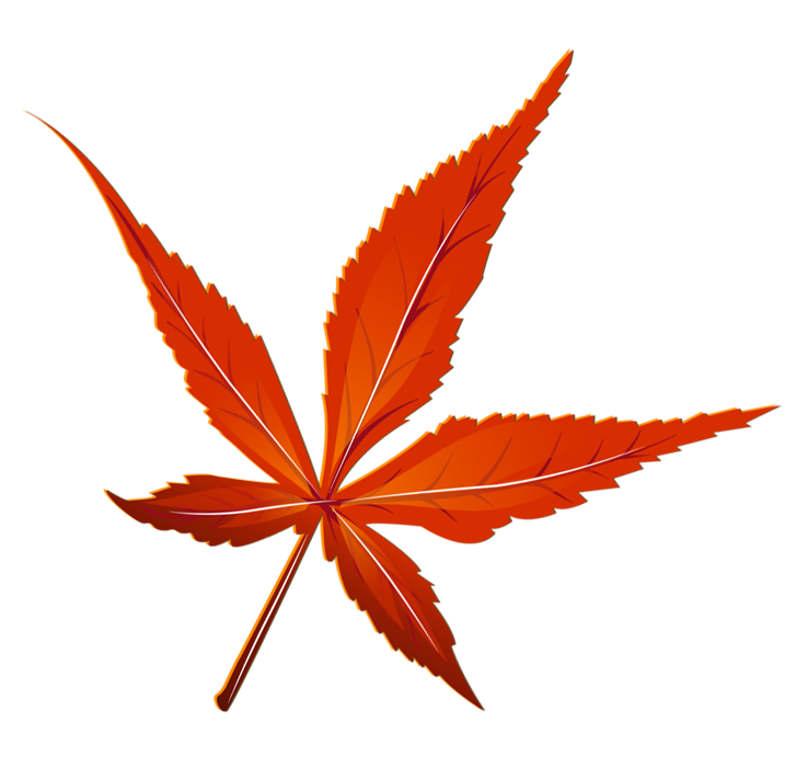 Transparent Red Leaf Picture Gallery Yopriceville High