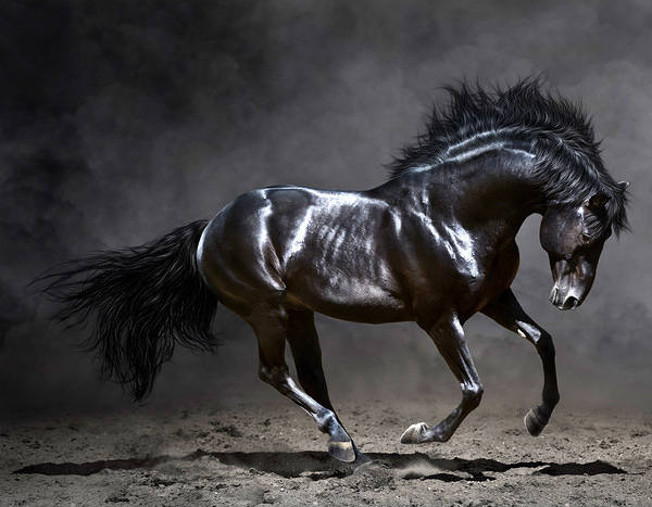Beautiful Black Horse Background Gallery Yopriceville
