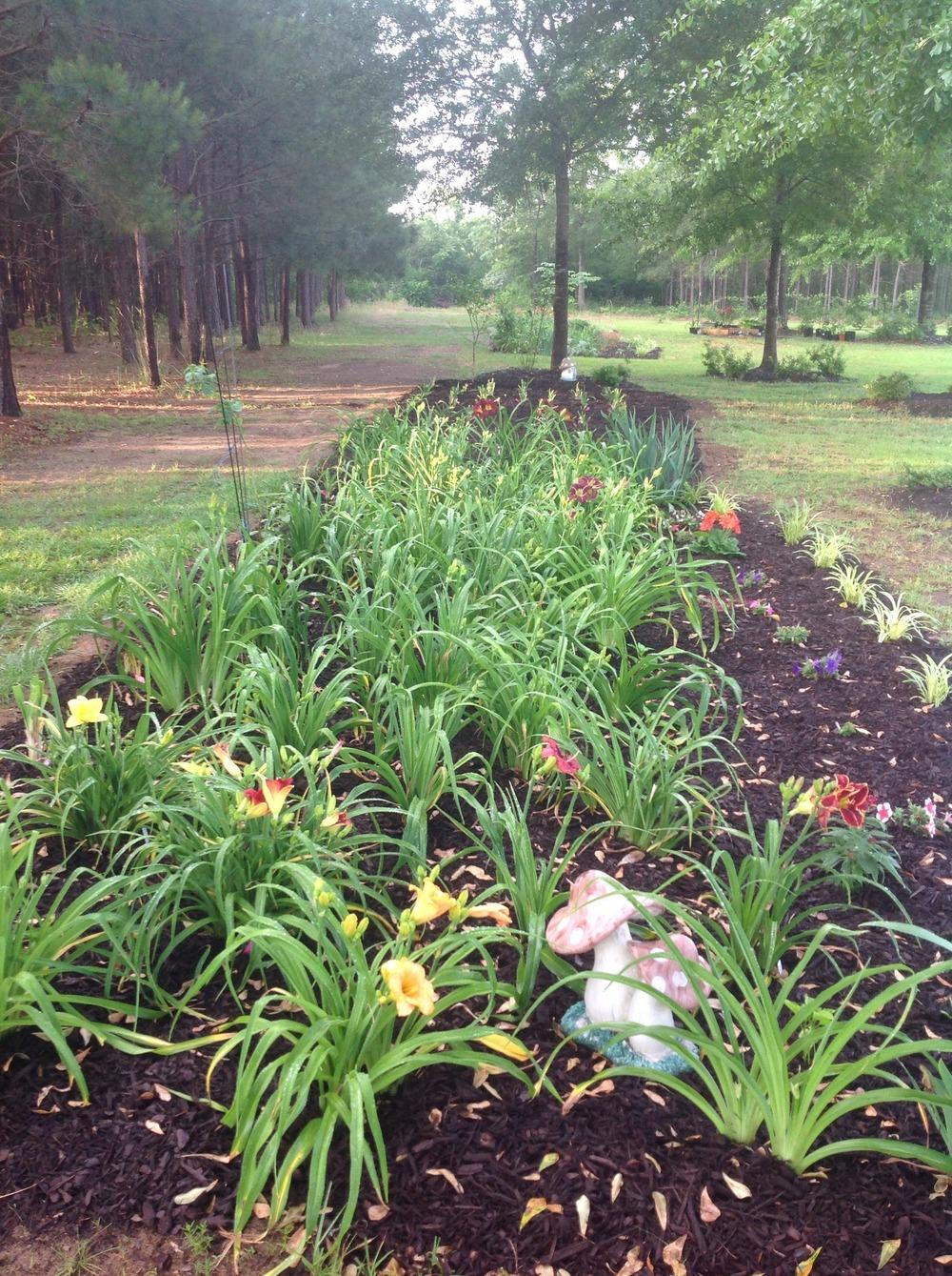 Daylilies Forum How Many Daylilies Are Too Many Garden Org