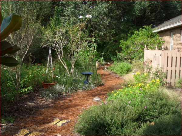 Photos Of A Florida Friendly Landscape Makeover In Manatee