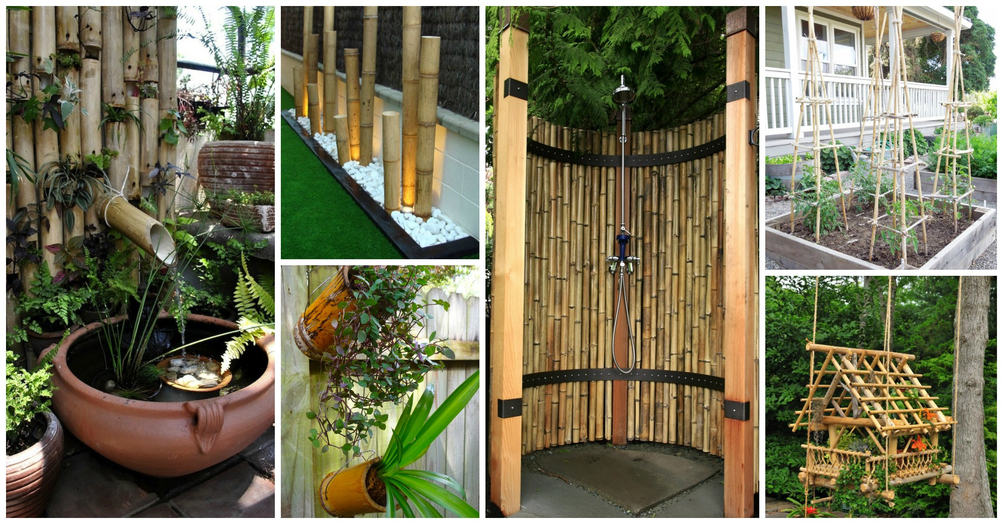 Growing Bamboo Shoots
