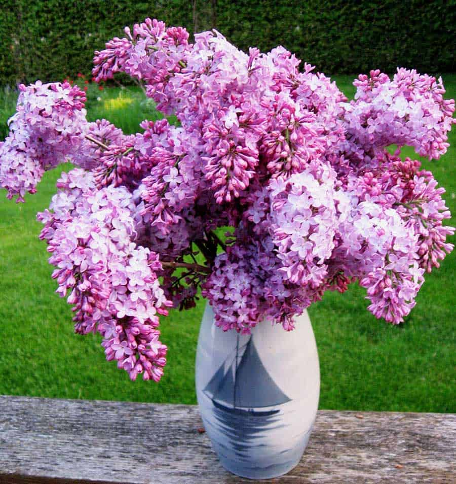 You Do Carnations Plant When