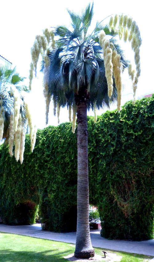 Ornamental Water Plants