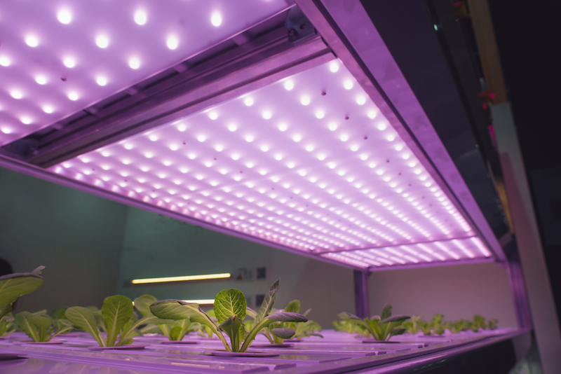 How To Make A Simple Diy Indoor Grow Lights To Start Seeds