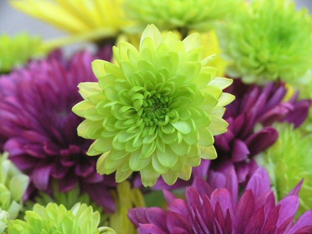 What Color Flowers Mean