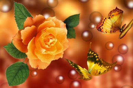 3D Yellow Rose Wallpapers   Best Yellow Rose HD LiveWallpaper yellow rose wallpaper