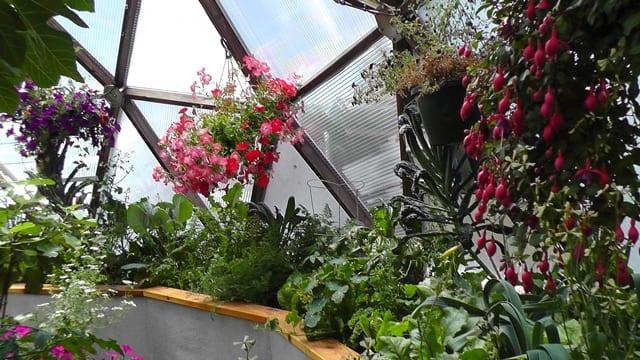 Above Ground Garden Kit