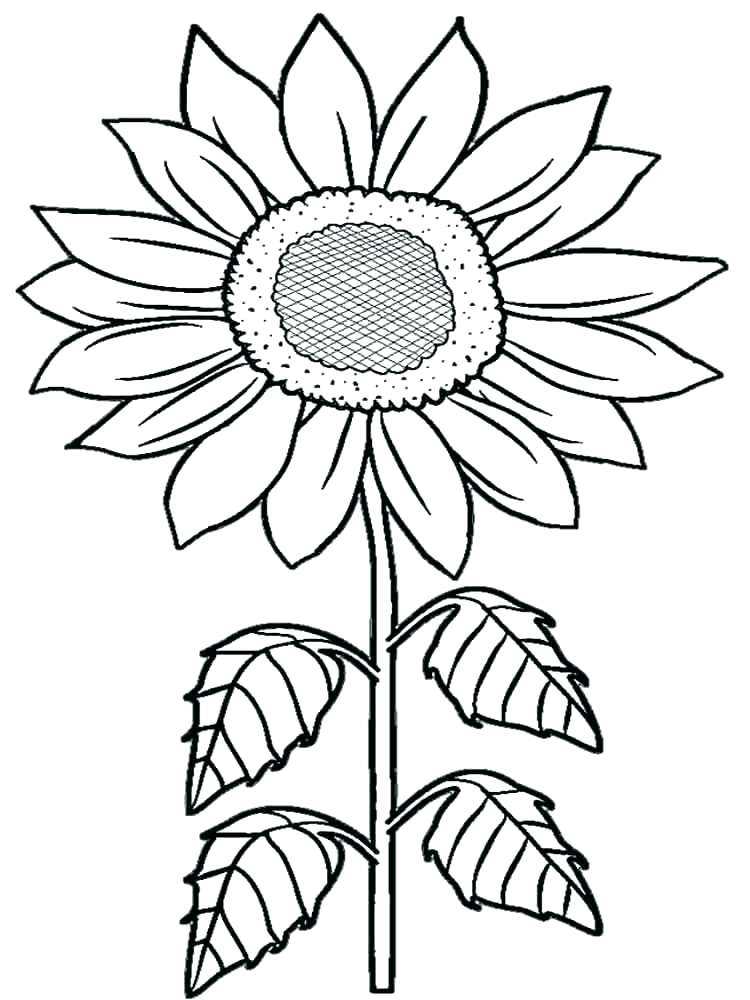 Rainforest Coloring Sheets Flowers