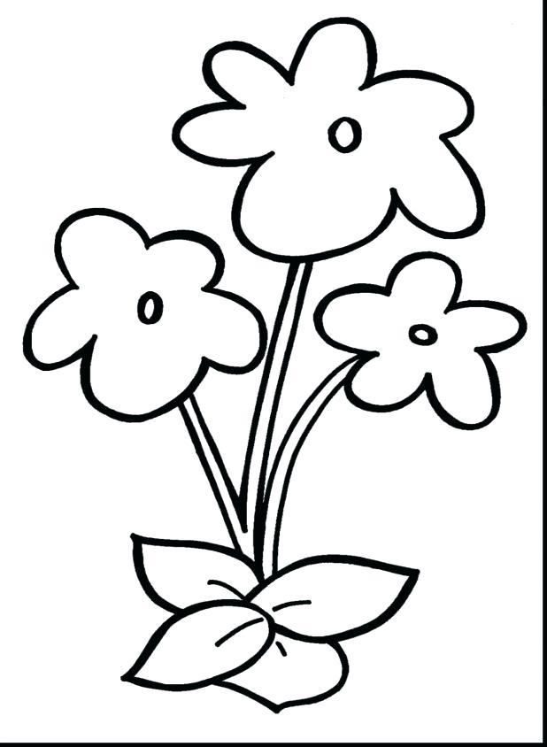 Rainforest Plants And Flowers Printables