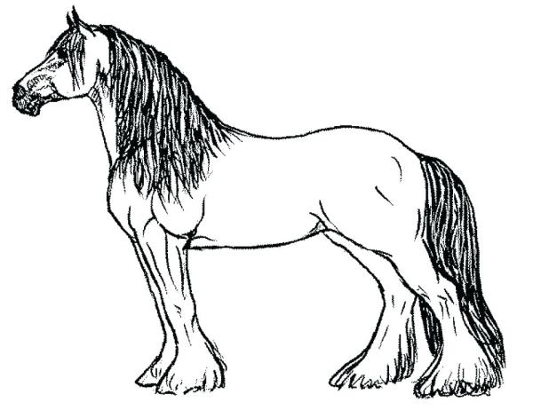 horse head coloring page # 48