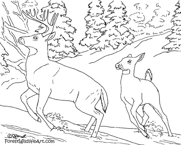 wildlife coloring pages # 35