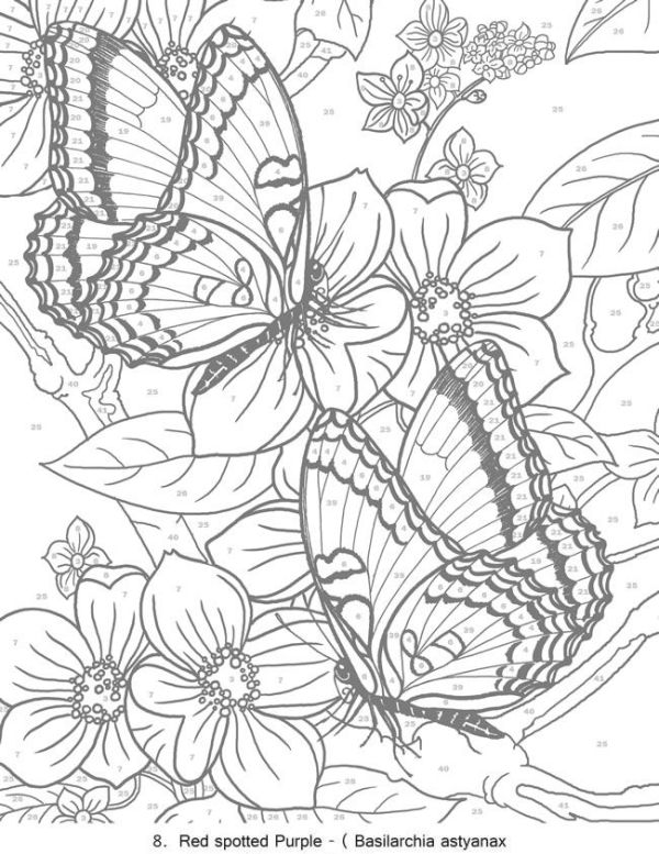 butterfly coloring pages for adults # 40