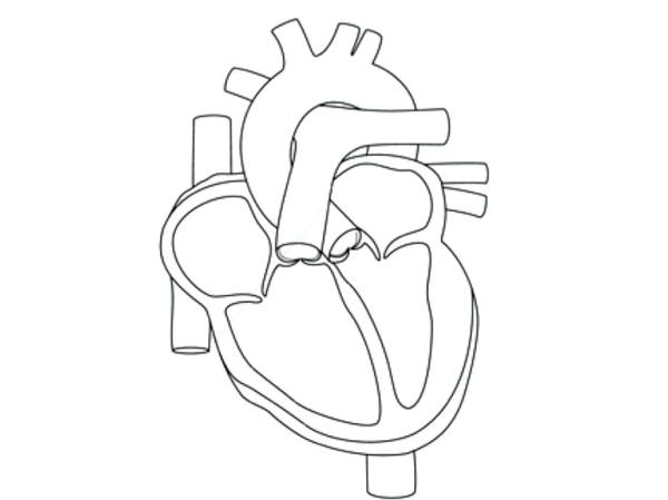 human heart coloring page # 40